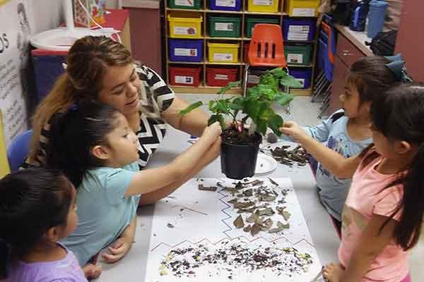 AVANCE-teacher-plant